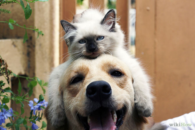 Acclimate a Dog to a Cat Step 8Bullet1.jpg